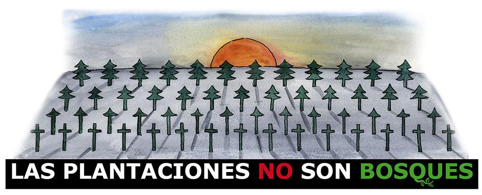 las-plantaciones-no-son-bosques
